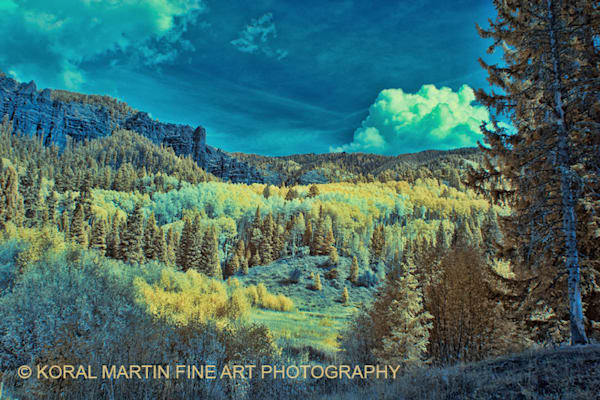 Infrared Aspen Evergreen Mountains 6374 V2    Photograph | Infrared  Photography |  Koral Martin Fine Art Photography