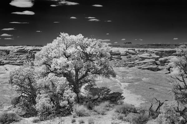 BLACK AND WHITE and INFRARED