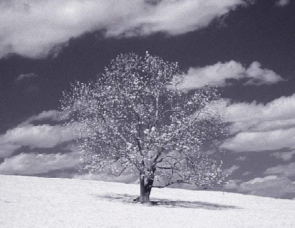 Infrared Lone Tree | Infrared Photography | Koral Martin Fine Art Photography