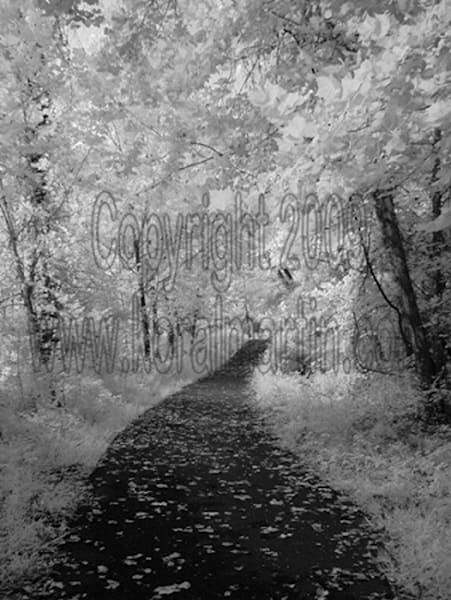 Infrared Trail  | Infrared Photography | Koral Martin Fine Art Photography