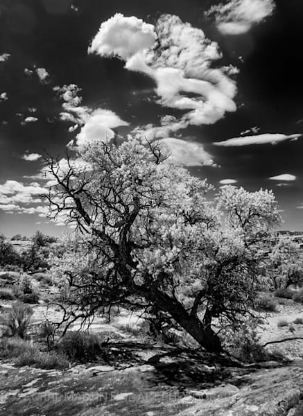 Infrared Tree Silver Photograph 5666  | Infrared Photography | Koral Martin Fine Art Photography