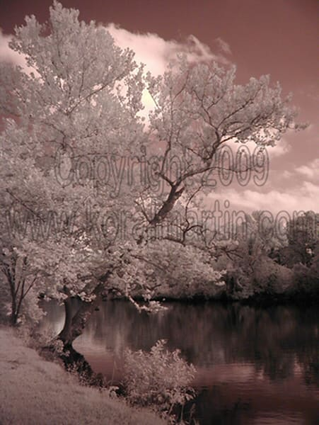 Infrared Tree shoal creek  | Infrared Photography | Koral Martin Fine Art Photography