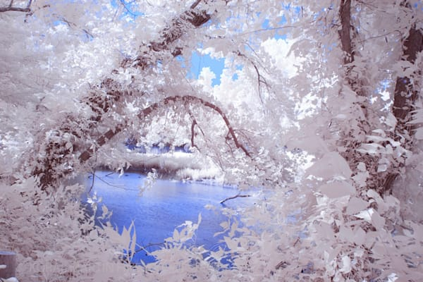 Infrared Trees shoal creek  | Infrared Photography | Koral Martin Fine Art Photography