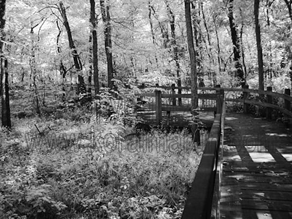 Infrared Walking bridge George Washington Carver | Infrared Photography | Koral Martin Fine Art Photography