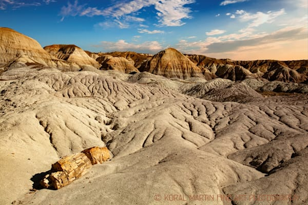 Petrified Forest LP Photograph 1480  | New Mexico Photography | Koral Martin Fine Art Photography