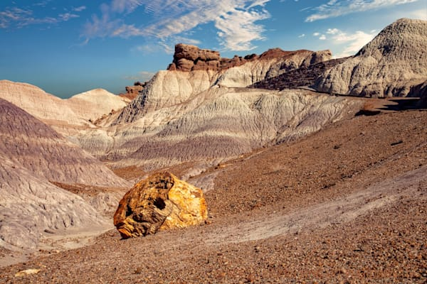 Petrified Forest Photograph 1457LP  | New Mexico Photography | Koral Martin Fine Art Photography