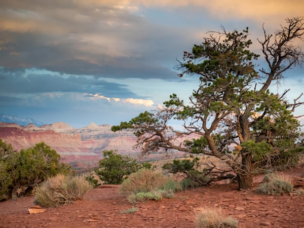 Sunset Point Tree Capitol Reef National Park