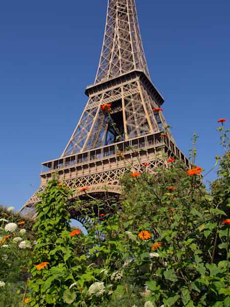 Steel And Flowers Eiffel Tower Photography Art | DMM Media, LLC