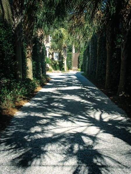 Palm Tree Shadows on Driveway Charleston SC