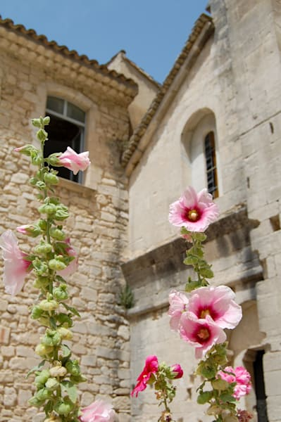 Pink Flowers at L'Abbaye