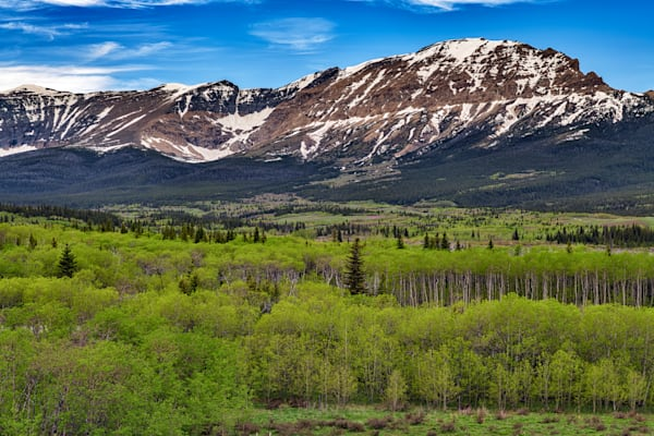 Aspens in the Foothills by Rick Berk