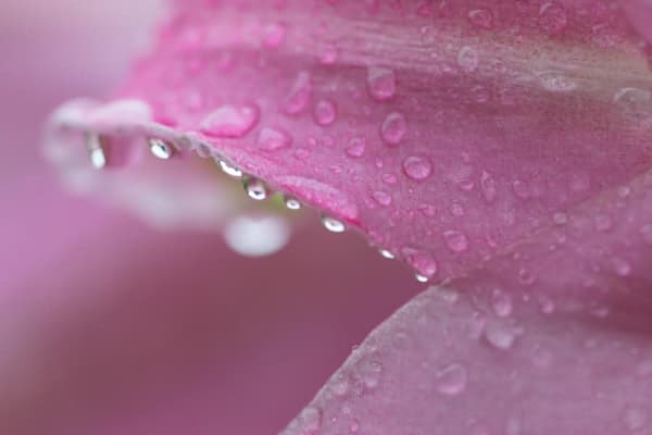 Raindrop bejeweled lily - shop fine-art notecards | Closer Views