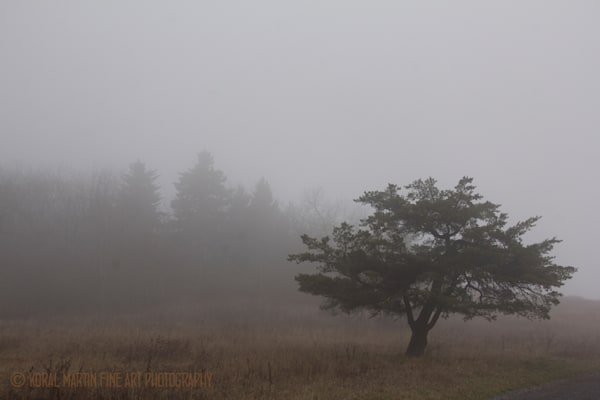 Tree fog Photograph 6134 Skyline Drive  | West Virginia and Virginia Photography | Koral Martin Fine Art Photography