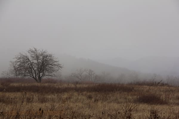 Tree Fog Mountains Photograph 5894 Skyline Drive  | West Virginia and Virginia Photography | Koral Martin Fine Art Photography