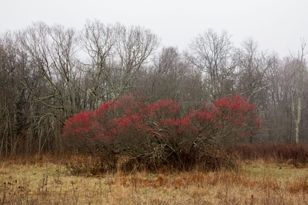 Red Bush Fog Photograph 6109 Skyline Drive  | West Virginia and Virginia Photography | Koral Martin Fine Art Photography