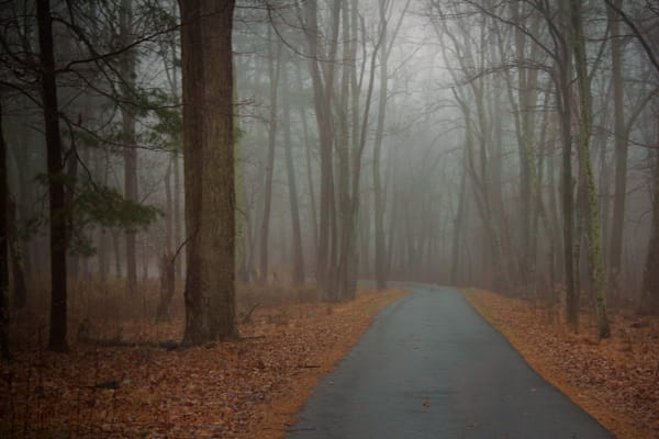 Tree Fog Road Photograph 5781 Skyline Drive  | West Virginia and Virginia Photography | Koral Martin Fine Art Photography