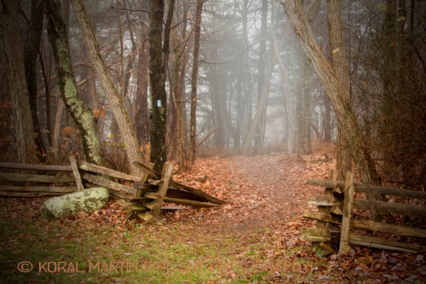 Trees fence trail fog Photograph 5793 Skyline Drive  | West Virginia and Virginia Photography | Koral Martin Fine Art Photography