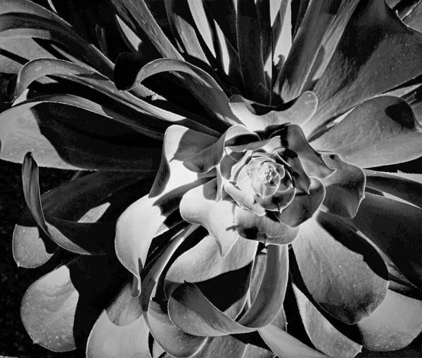 Dark Flower Art | ARTHOUSEarts