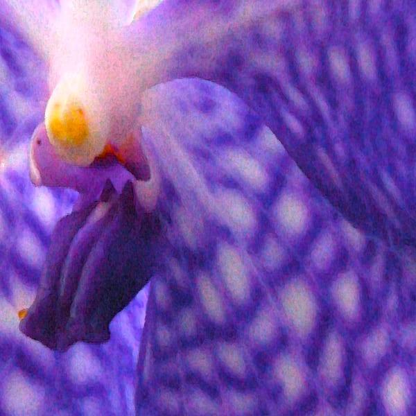 Orchid | Lauree Feldman | Roost Artist