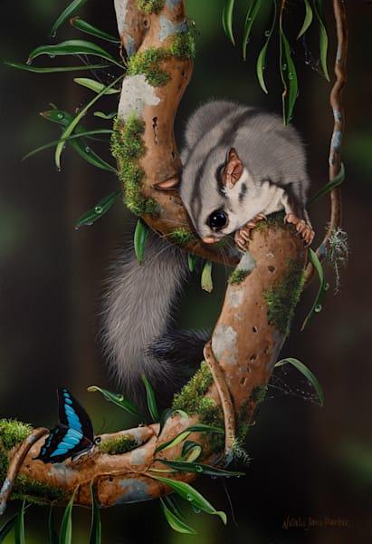 Forest Friendship - Sugar Glider Possum with a Blue Triangle Butterfly Natalie Jane Parker Australian Native Wildlife