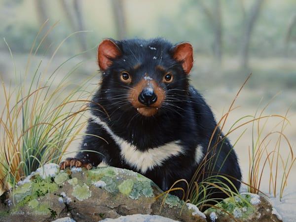 Winter Whiskers - Tasmanian Devil (Sarcophilus harrisii) | Acrylic on Clayboard