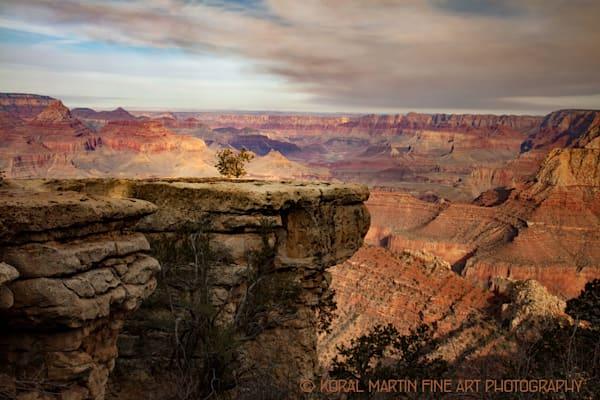 Grand Canyon View tree Photograph 3525 | Arizona Photography | Koral Martin Fine Art Photography