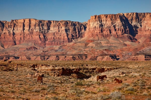 Horses and Red Rock Arizona Photograph 4973 | Arizona Photography | Koral Martin Fine Art Photography