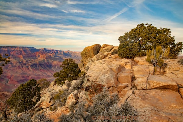 Grand Canyon View tree Photograph 3608 | Arizona Photography | Koral Martin Fine Art Photography