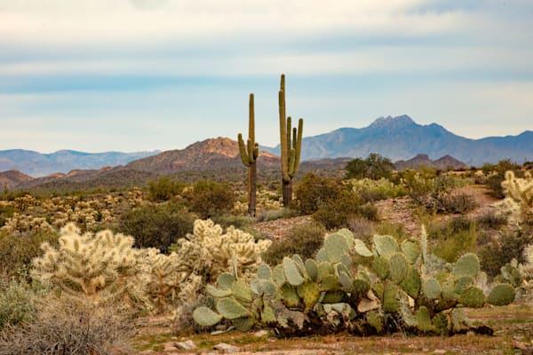 Lost Dutchman View Apache Trail Photograph 2006 AZ LF  | Arizona Photography | Koral Martin Fine Art Photography