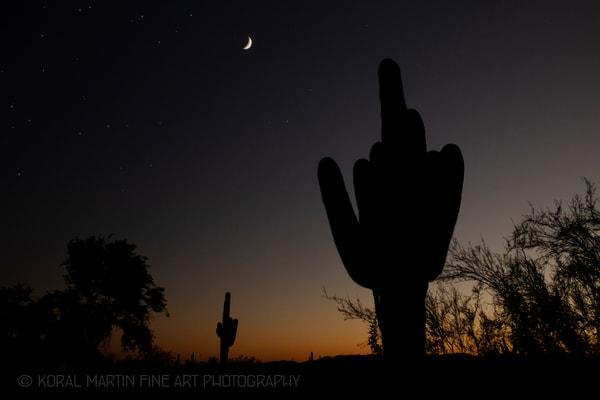Saguaro Sunset Photograph 1796 | Arizona Photography | Koral Martin Fine Art Photography
