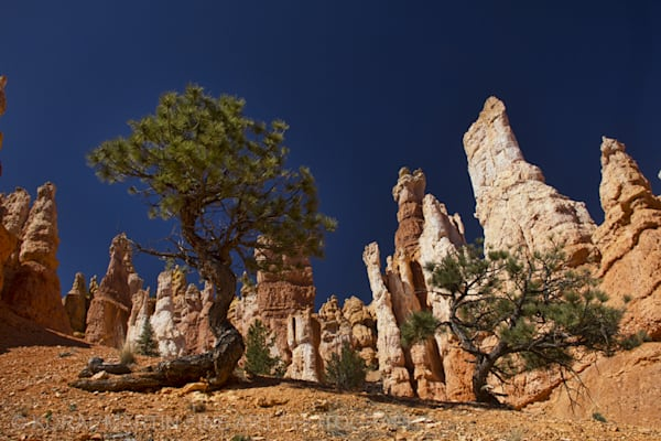 Bryce Canyon Photograph 3606  | Utah Photography | Koral Martin Fine Art Photography