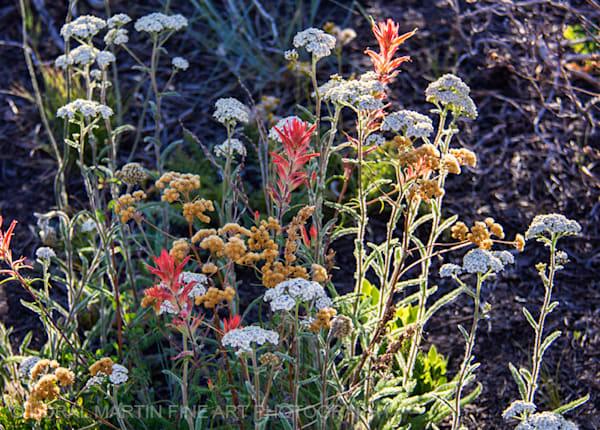 Bryce Canyon wildflower Photograph 4869   Utah Photography   Koral Martin Fine Art Photography