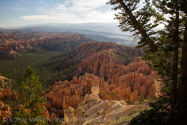 Bryce Canyon 4379g    Photograph | Utah  Photography |  Koral Martin Fine Art Photography
