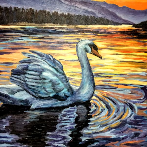 Swan at sunset by Alaska mountains and lake art print