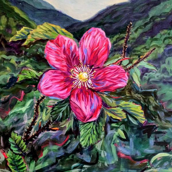 Alaska Wildest Rose wildflower art print by Amanda Faith Thompson