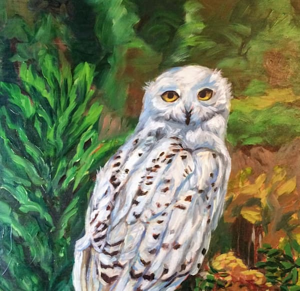 Snowy White Owl Alaska art print by Amanda Faith