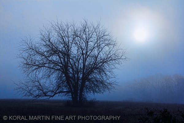 Fog Tree Photograph 1634  | Missouri Photography | Koral Martin Fine Art Photography