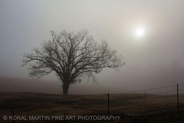 Fog Tree Photograph 1644  | Missouri Photography | Koral Martin Fine Art Photography