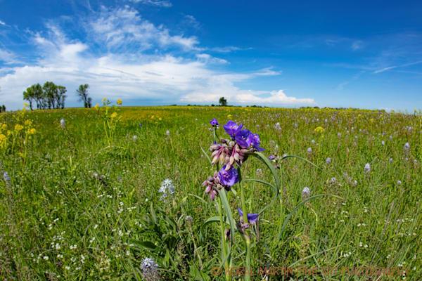 Prairie State Park | Missouri Photography | Koral Martin Fine Art Photography