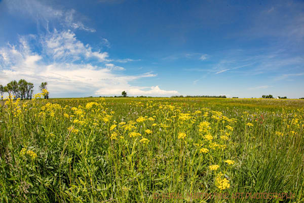 Prairie State Park Photograph 008 | Missouri Photography | Koral Martin Fine Art Photography