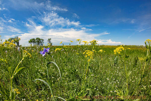 Prairie State Park 0027 | Missouri Photography | Koral Martin Fine Art Photography
