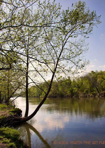 Shoal Creek Curves  | Missouri Photography | Koral Martin Fine Art Photography