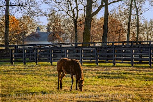 Kentucky Horse Farm Photograph 6298    | Kentucky Photography | Koral Martin Fine Art Photography