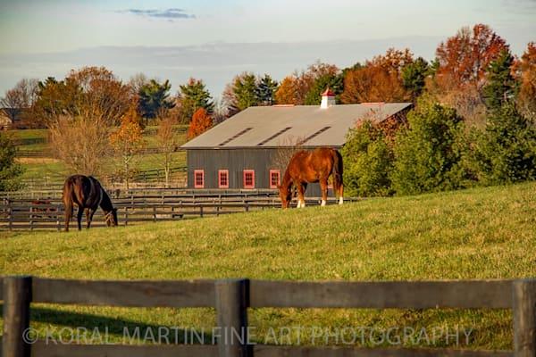 Kentucky Horse Farm Photograph 6332    | Kentucky Photography | Koral Martin Fine Art Photography