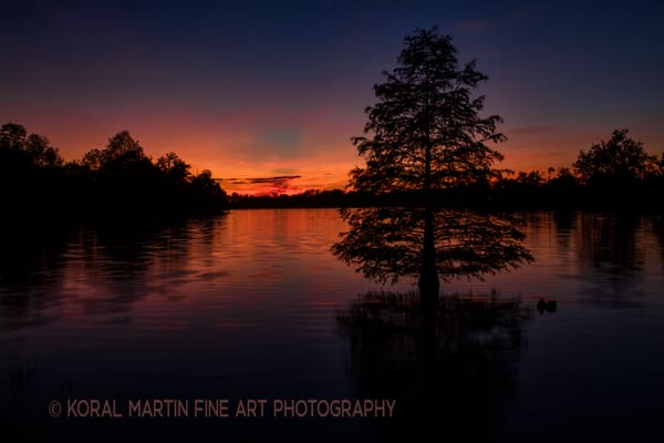 Sunet Cypressjacobson Horiz8899 LF    Photograph | Kentucky  Photography |  Koral Martin Fine Art Photography