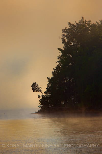 Foggy Tree on Lake Barkley Photograph 8623  | Kentucky Photography | Koral Martin Fine Art Photography