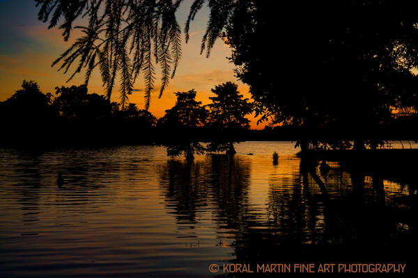 Sunset Twin Cypress Photograph 8858 LF  | Kentucky Photography | Koral Martin Fine Art Photography