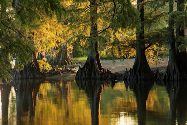 Cypress Trees Sunrise Photograph 92010 | Tennessee Photography | Koral Martin Fine Art Photography