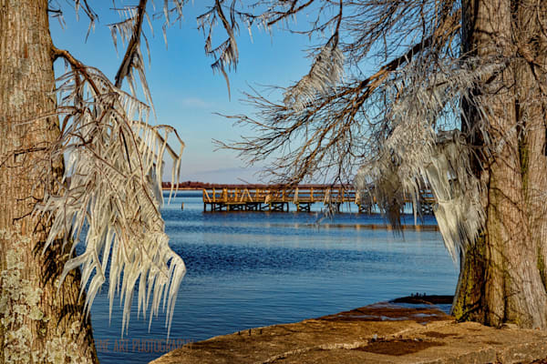 Cypress with Ice Reelfoot Lake Peer Photograph 8991 | Tennessee Photography | Koral Martin Fine Art Photography