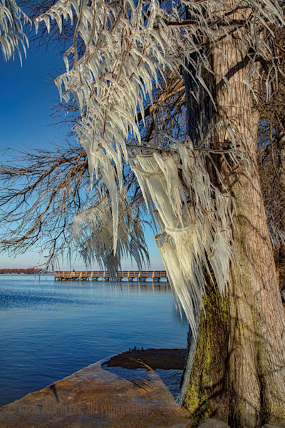Cypress with Ice Reelfoot Lake Peer Photograph 8001 | Tennessee Photography | Koral Martin Fine Art Photography
